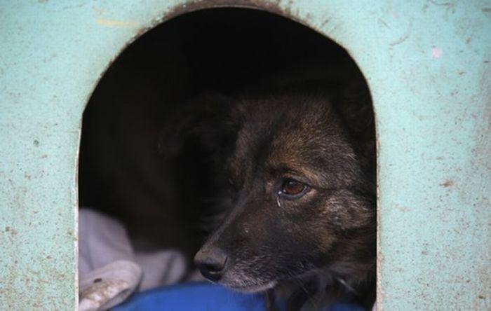 Трущобы для собак в Бразилии (7 фото)