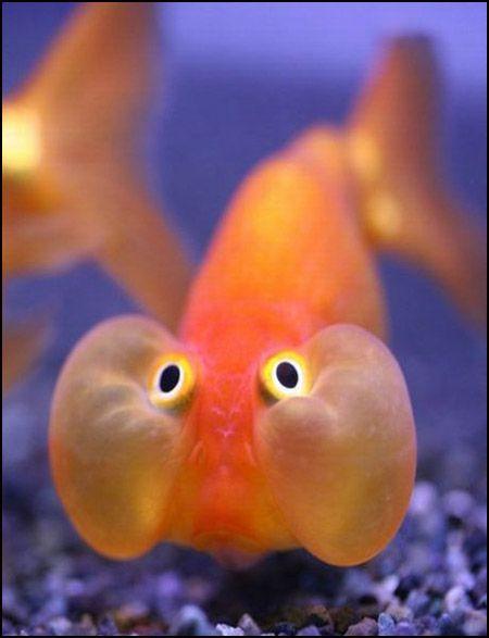 Рыбы с человеческими лицами (30 фото)