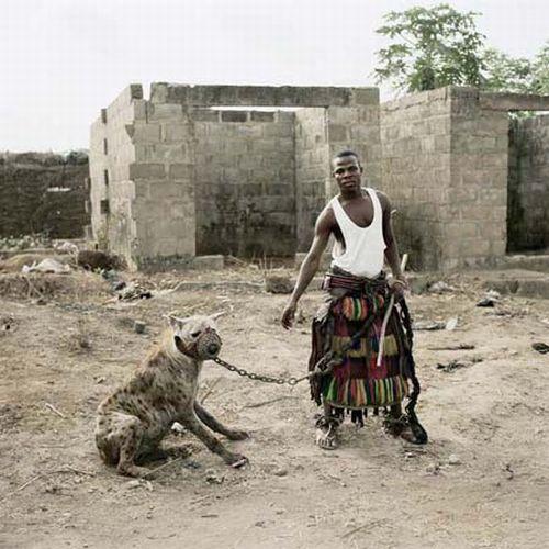 Африканские домашние животные (33 фото)