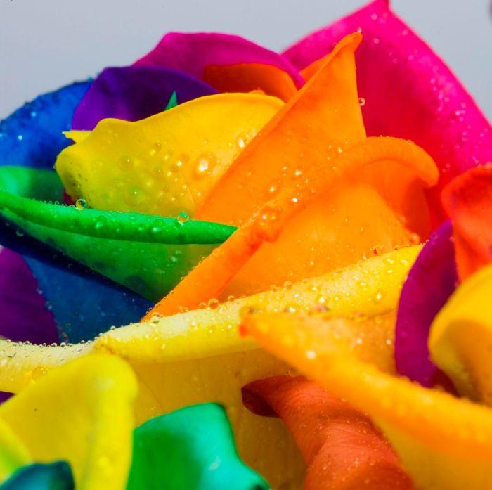 Разноцветные цветы (20 фото)