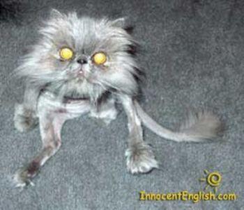 Уродливые коты (46 фото)