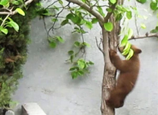 Когда медведи приходят в гости (11 фото)