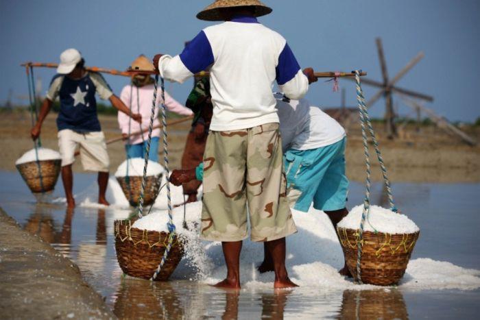 Добыча соли в Индии и Индонезии DiddlyBop.