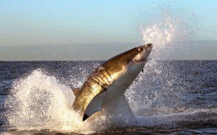 """Прыгающая акула  """" Фото и видео приколы, самое шокирующее видео."""