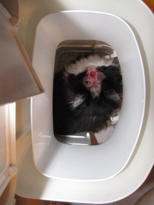 Чейз. Кот без лица (19 фото)