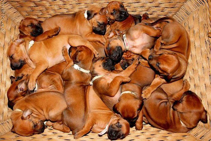 Симпатичные щенки (110 фото)