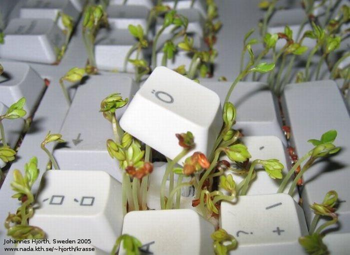 Зеленая клавиатура (8 фото)