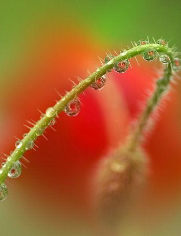 Очень красивые фотографии Татьяны Макушиной (32 фото)