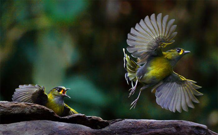 Красивые птицы.
