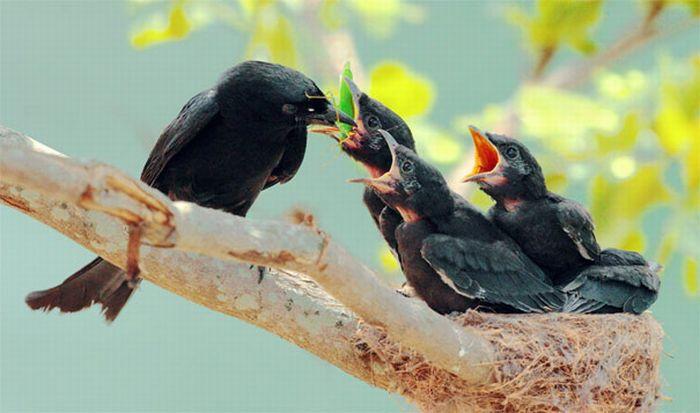 Красивые фотографии птиц (38 фото)