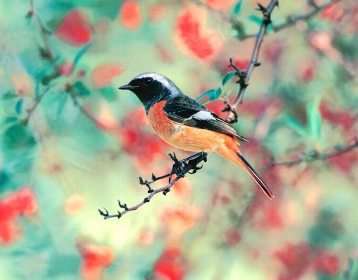 красивые фотографии: