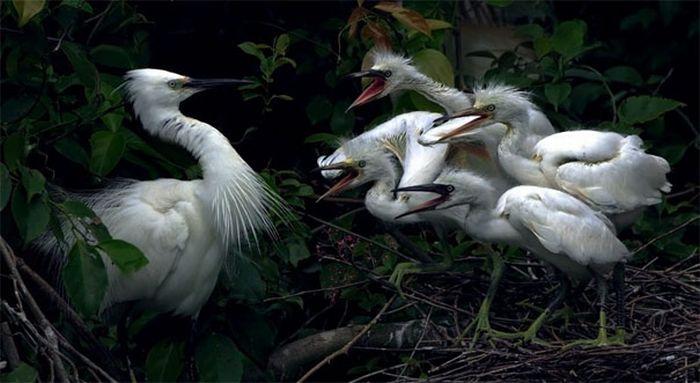 Красивые и смешные фотографии птиц (40 фото)