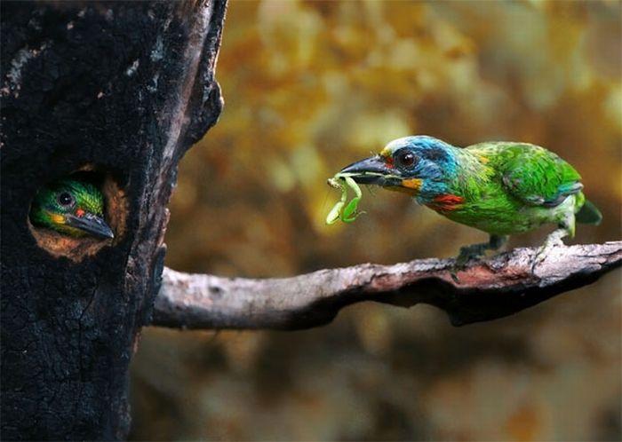 Шикарные фото птиц от John & Fish (40 фото)