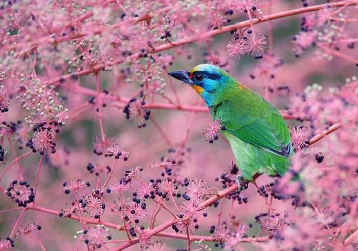 команда фото картинки красивых птиц этот
