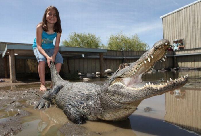 9-летняя девочка, работающая с крокодилами (7 фото)
