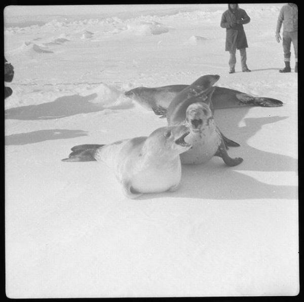 Арктическая экспедиция (25 фото)
