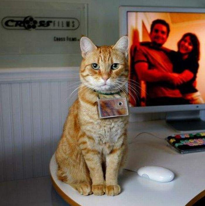 Жизнь глазами кота (75 фото)
