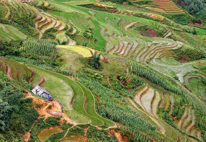 Красивые рисовые поля (36 фото)