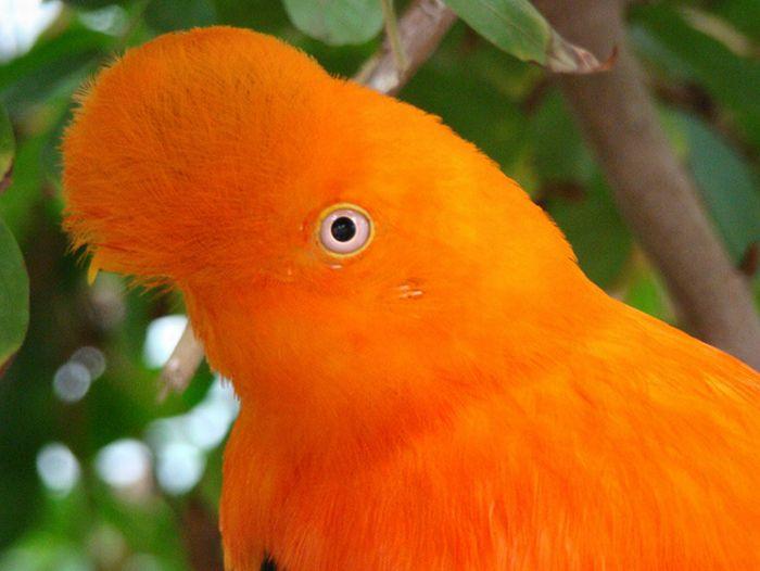 Оранжевые животные (17 фото)