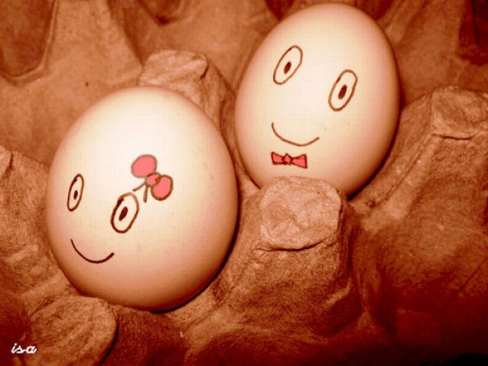 Секретная жизнь куриных яиц (64 фото)