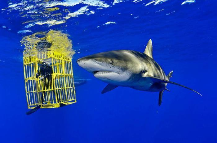 Подводные фотографии Брайана Скерри (19 фото)
