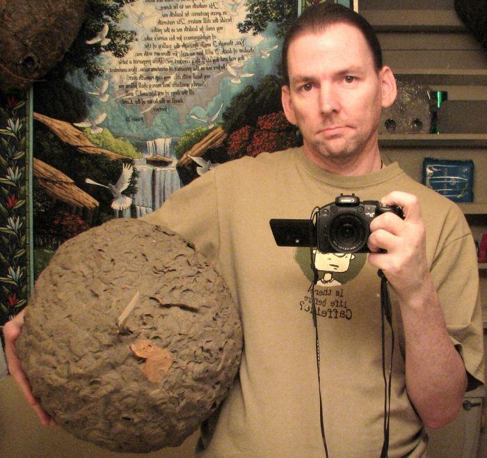 Коллекция осиных гнезд (16 фото)