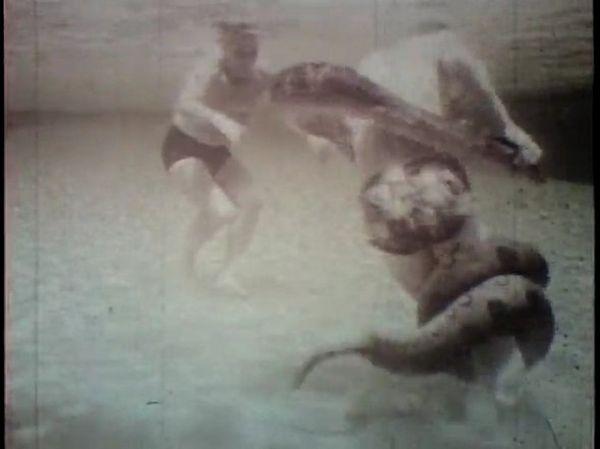 Борьба с 10-метровой анакондой под водой (19 фото + видео)