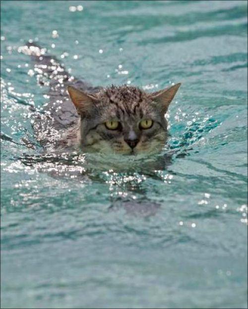 Плавающие коты. Часть 2 (30 фото)