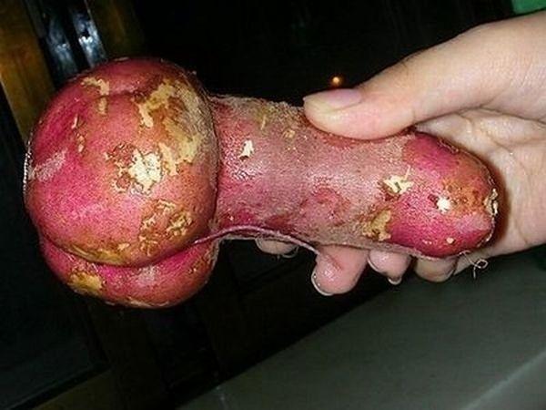 Случайный пенис (69 фото)