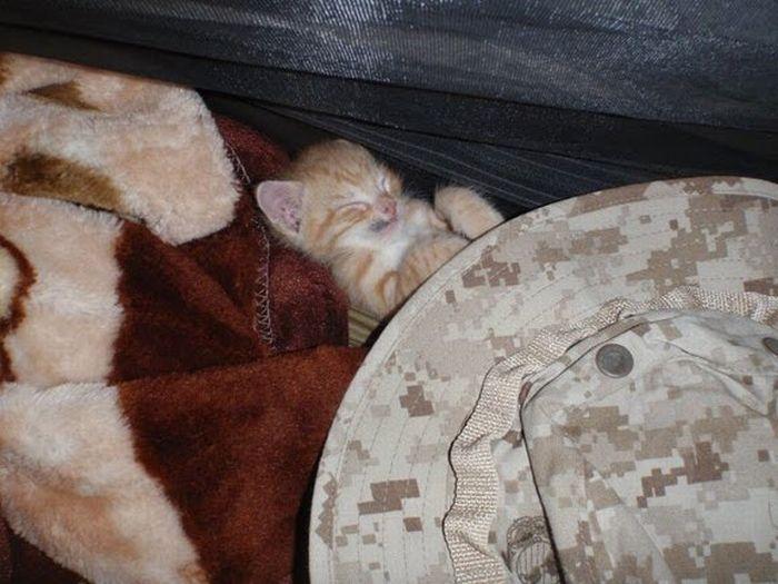 Котята американских морпехов (21 фото)