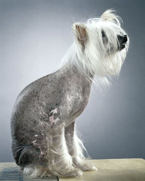 Классные портреты собак (24 фото)