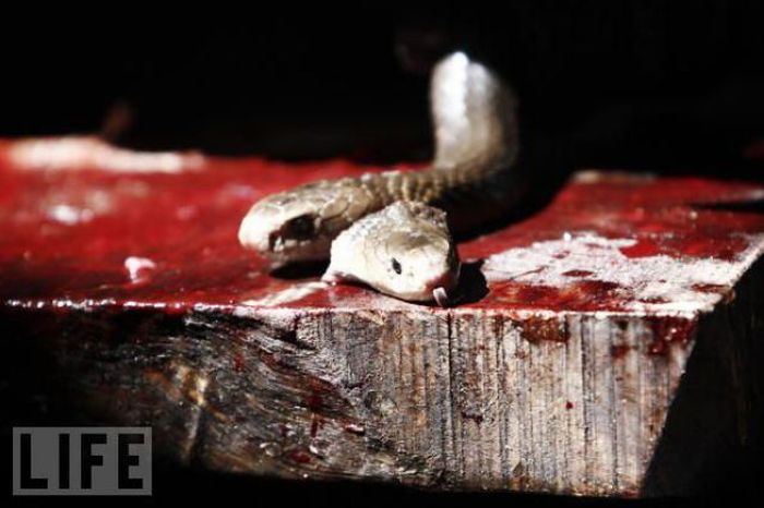 Гамбургеры из змей (19 фото)