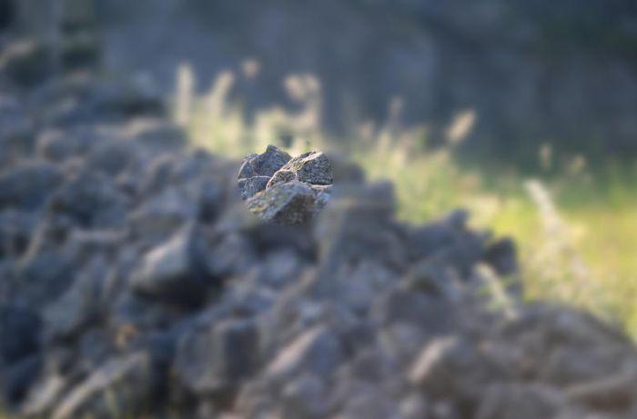 Найдите сову (3 фото)
