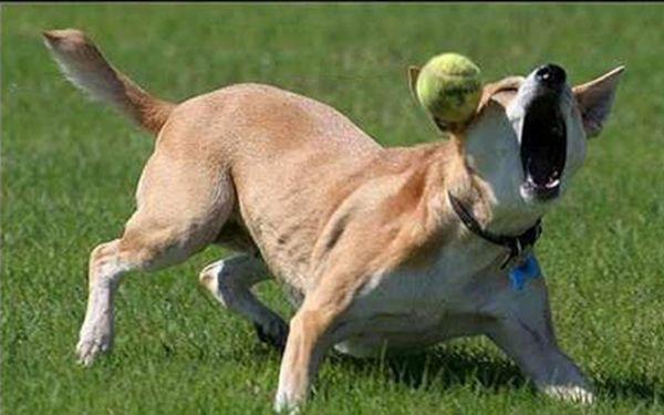 Смешные ситуации с собаками (25 фото)