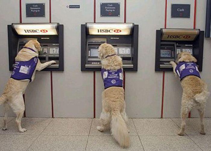 севера смешные картинки с банкоматами сюда, карамель