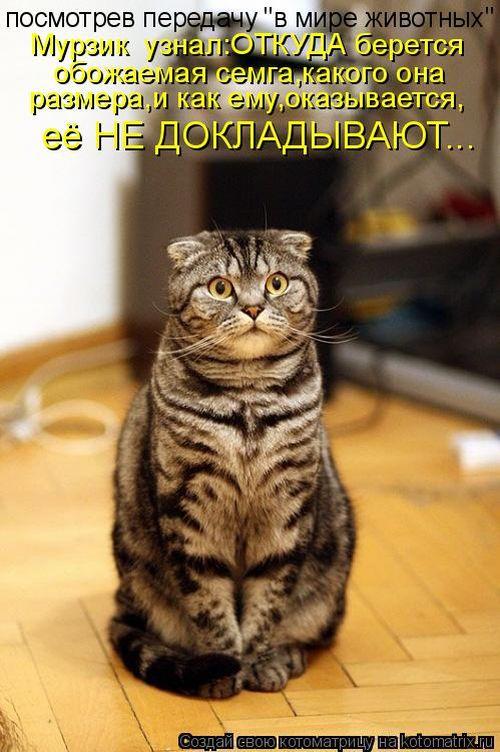 фото кошек смешные с надписями.