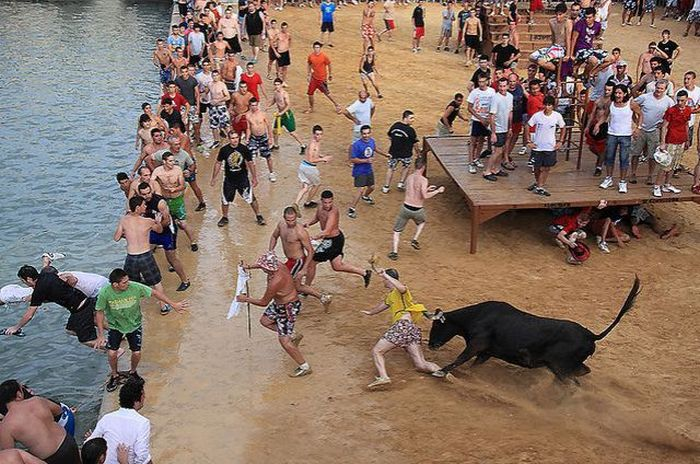 Бег с быками (25 фото)