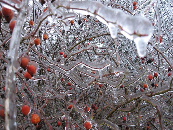 Красивые зимние фотографии (49 фото)