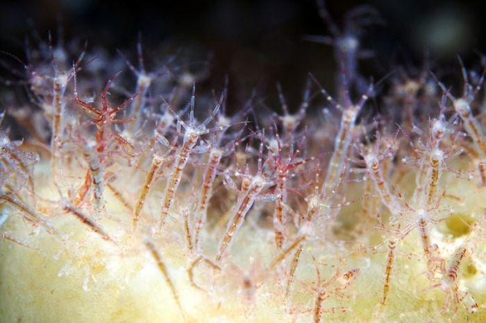 Красивый подводный мир Белого моря (120 фото)