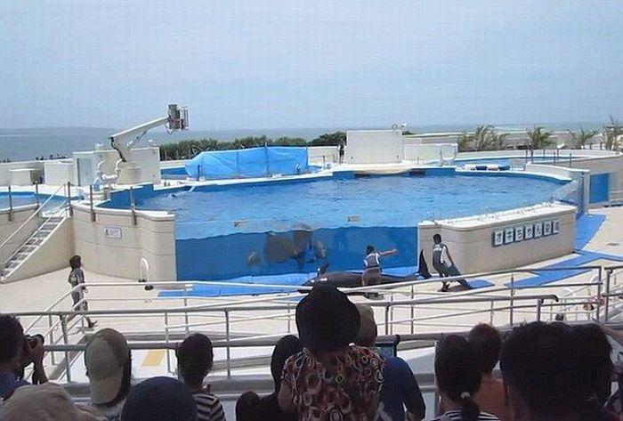 Дельфин выпрыгнул из бассейна (5 фото)
