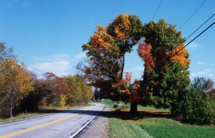 Удивительные деревья (16 фото)