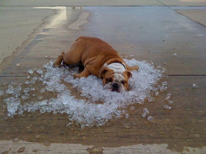 Как спастись от жары в квартире беременной