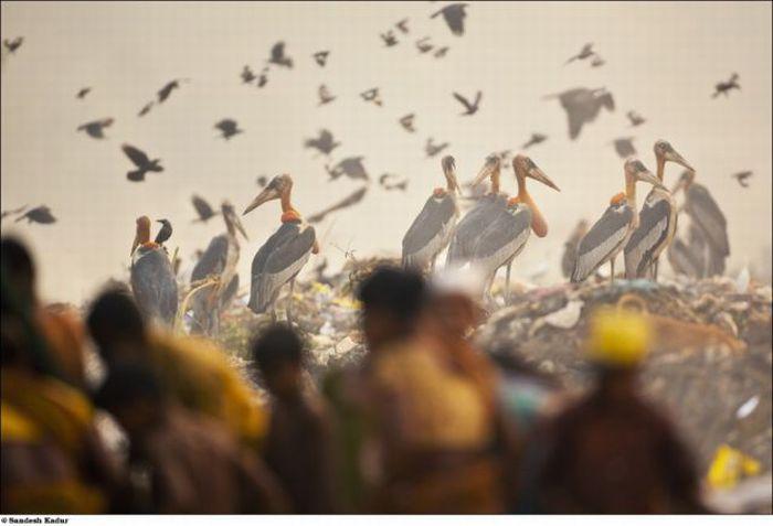 Потрясающие фотографии дикой природы (83 фото)