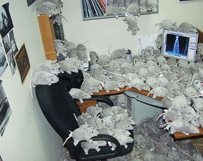 Классные офисные приколы (21 фото)