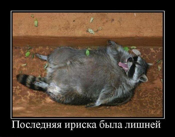 http://ru.trinixy.ru/pics4/20100723/demotivatry_05.jpg