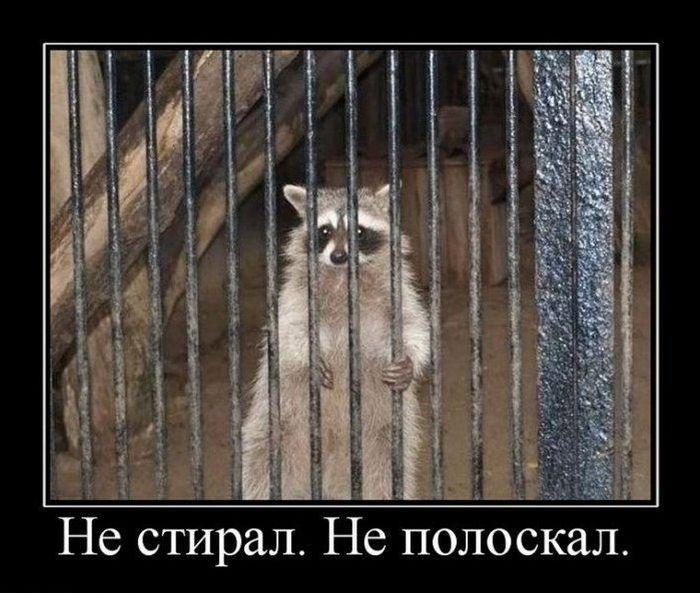 http://ru.trinixy.ru/pics4/20100723/demotivatry_146.jpg