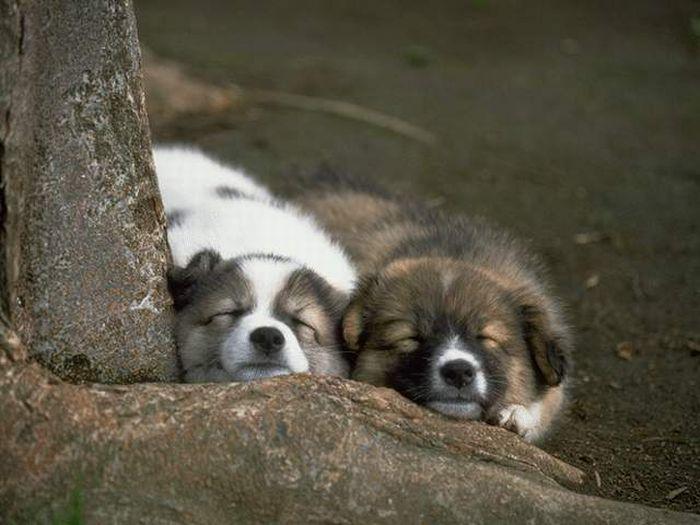 Классные щенки (25 фото)
