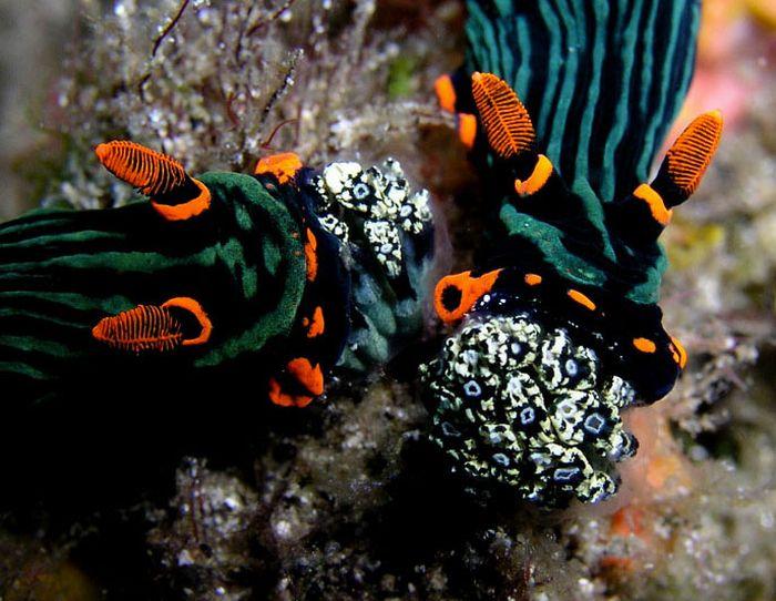 Красивые обитатели подводного мира (27 фото)