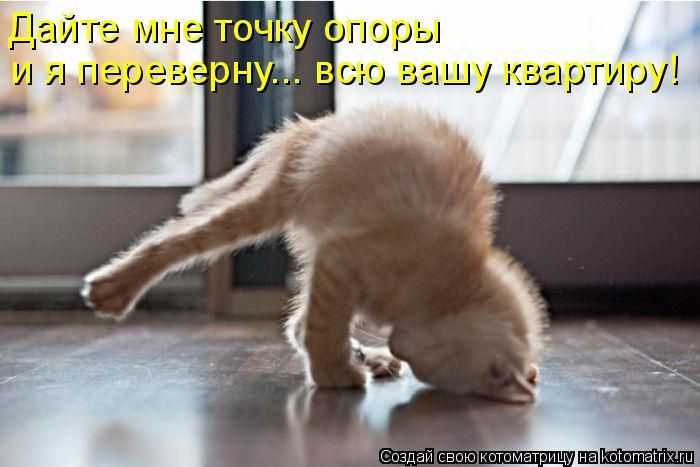 http://ru.trinixy.ru/pics4/20100730/kotomatrix_25.jpg