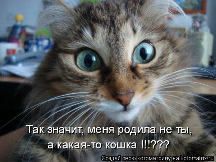 картинки с кошками с надписями.
